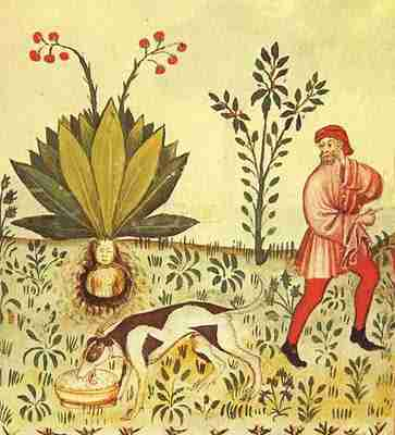 mandrake-in-tacuinum-sanitatis-15th-century-manuscript